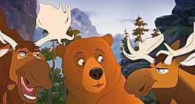 ELGEN: Akkurat som i Norge er det elgen som er skogens konge.
