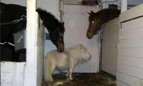 F�R IKKE BO MED DE STORE: Cupido f�r ikke lov til � bo med sine h�ye venner. De har en tendens til � sparke han hvis de vanker sammen. Foto: Therese Elstad