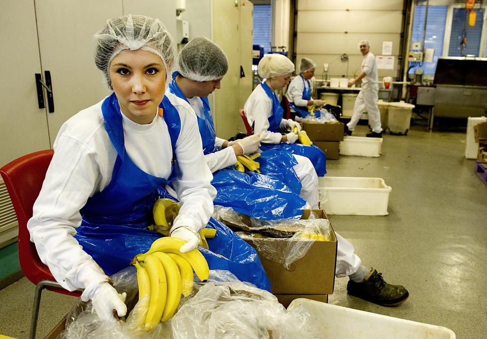 BANANSKRELLER: Linn�a Nodelijk har arbeid som bananskreller denne uka. Hun sier at hun aldri kunne hatt jobben over en lengre periode, men at hun trenger pengene for � betale husleia. Sist fredag ble hun og kollegaene tema i �Skavlan�. Foto: �istein Norum Monsen/DAGBLADET.