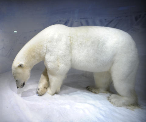 KOLBJ�RN: Mange barn synes det er mest moro � hilse p� isbj�rnen Kolbj�rn. Foto: JOHN TERJE PEDERSEN