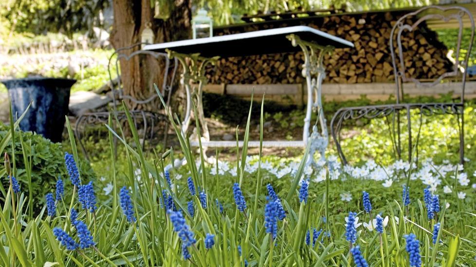 NÆR FRAMTID: Det er tid for å rydde opp i vårhagen. Gjør du hagearbeidet i riktig rekkefølge, blir sommerhagen en suksess. FOTO: Helge Eek