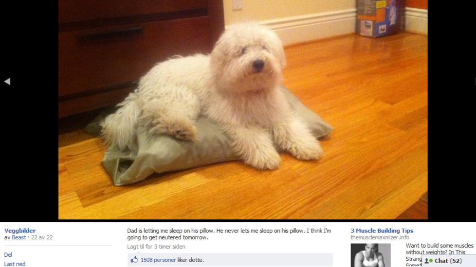 SISTE NATT MED GJENGEN: Beast, Mark Zuckerbergs hund, g�r en testikkell�s fremtid i m�te. Foto: FACEBOOK