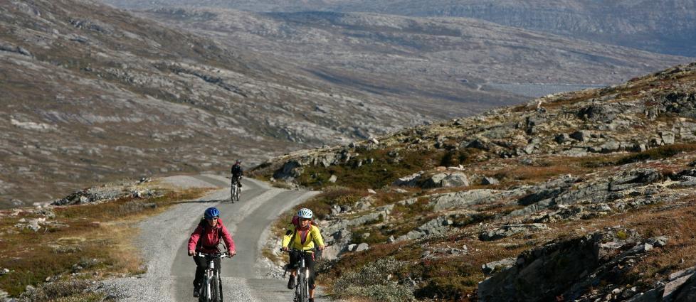 P� TO HJUL: Ta med deg sykkel p� h�stferie. Fjellet har mange fine sykkelturer � by p�, som her langs Aursj�vegen ved Dovre nasjonalpark. Foto: ODD ROAR LANGE