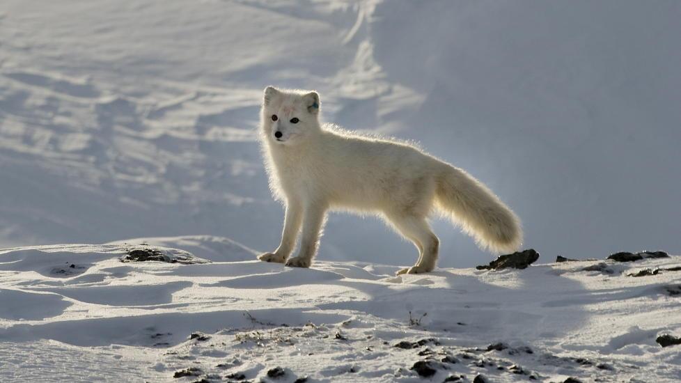 S�T, MEN GLEMT: Politikere snakker heller om CO2-fangst enn bevaring av dyr vi liker. Foto: Tor Erik H. Mathiesen.
