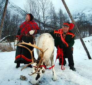 VESTERÅLEN: Laila og Arild Inga driver Inga Sami Siida i Vesterålen, nær Sortland. Her med reinsdyret Boris. Foto: KIRSTEN M. BUZZI