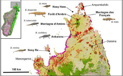 MIKROPARADIS: De �rsm� korthalekameleonene finnes bare i avgrensede �lommer� p� Madagaskar. I tillegg til B. micra fant forskerne det som trolig er tre nye arter. Grafikk: Frank Glaw et al.
