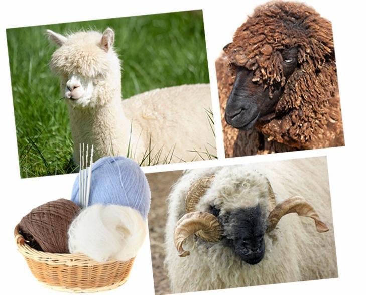 PRODUSENTENE: Her er noen av dyrene som produserer verdens fineste ulltyper! �verst fra venstre: Alpakka, karakulsau og merinosau. FOTO: Colourbox