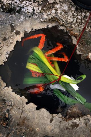 Utekj�kken: Krabbe, kreps og muslinger tilberedes best i varme kilder p� Island. Rett ved vokser timian som brukes som krydder til rettene.
