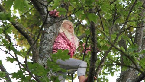 KLATRETRE: Barn elsker � klatre og det er god trening � pr�ve seg p� de h�yeste tr�rne. FOTO: Tore D. Carlsen