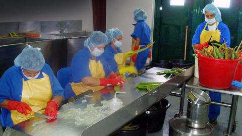 PRODUKSJON: Kvinnene i produksjonshallen sitter p� rekke og rad og skj�rer l�s den verdifulle innmaten i de nyplukkede aloe vera-bladene.
