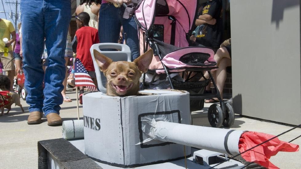 KREATIVT: Denne hunden var godt polstret i hundeparaden og virket greit forn�yd med kostymet. Foto: Getty Images/AFP