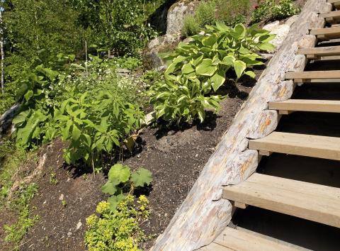 MAT FOR PLANTENE: Gj�dsel fungerer som mat for plantene - s� tilf�re dette for at plantene skal utvikle seg.  FOTO: Inger Mette Meling  Kostveit