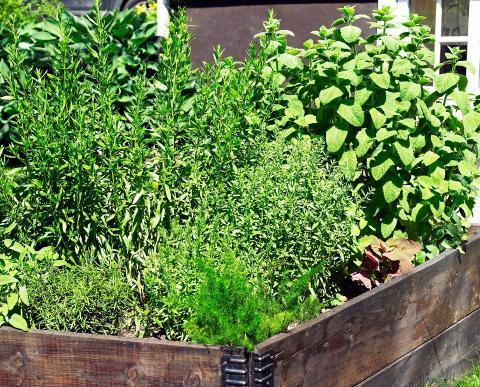 PLANTEVALG: Hvilken type jord du trenger avhenger av hva du skal plante. Er du usikker s� forh�r deg p� det lokale hagesenteret, eller hos andre som kan dette.  FOTO: Inger Mette Meling Kostveit