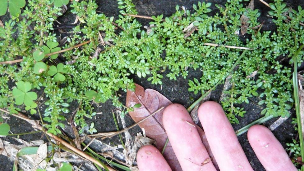 TA DEG TID: Holder jorden i hagen din m�l? Det finnes ting du kan gj�re for � finne ut av nettopp det.  FOTO: Flickr