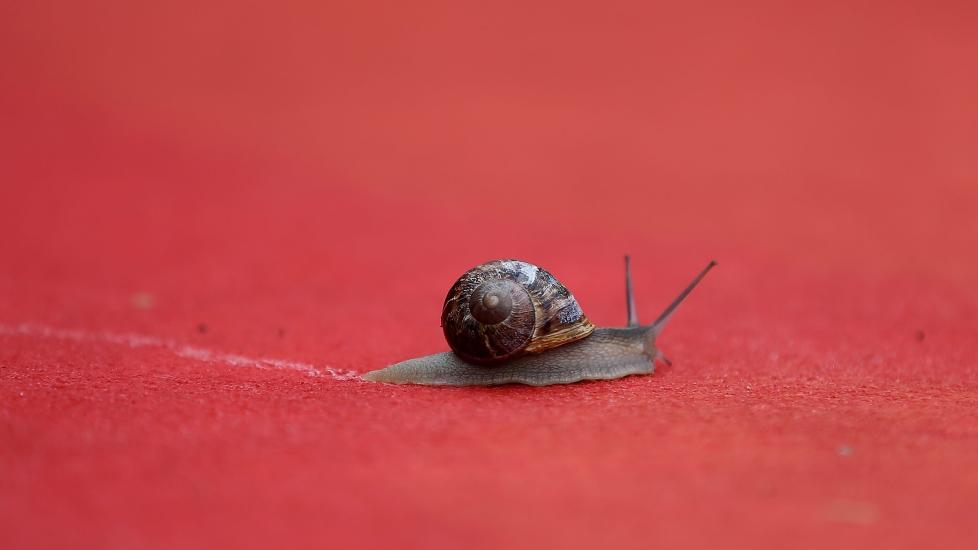 NYBAKT STJERNE: Den lille sneglen meldte plutselig sin ankomst p� den r�de l�peren i Cannes i g�r. Foto: Stella Pictures