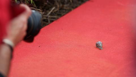 STJAL SHOWET 1: Denne sneglen forvillet seg opp p� den r�de l�peren i g�r. Foto: Stella Pictures