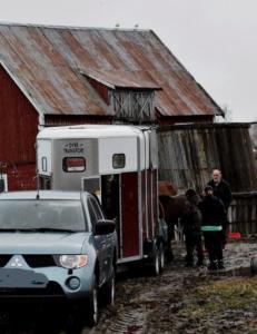 Hestemassakre avverget: G�r med p� � gi bort hestene