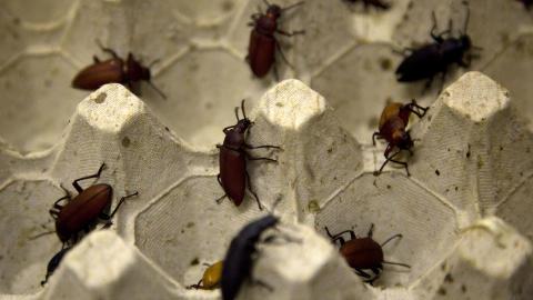 MAT: Disse billene kan bli menneskemat. Foto: REUTERS/Jerry Lampen/NTBScanpix