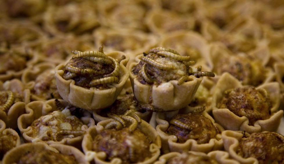 MELBILLELARVER: Dette er quich med melbillelarver.  Foto: FOOD-INSECTS/REUTERS/Jerry Lampen/NTBScanpix