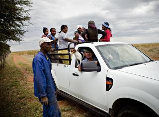 Transport: N�r arbeiderne skal hjem fra �keren, er det bare storbonden Gucki og terrieren Floh som f�r sitte i f�rerhuset. Arbeiderne m� dele p� lasteplanet.