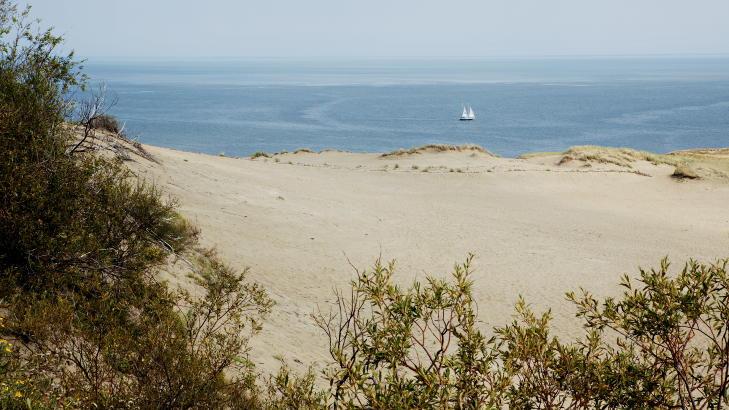 �EUROPAS SAHARA�:  Den Kuriske Landtunge i Litauen har Europas h�yeste sanddyner og har derfor f�tt navnet �Europas Sahara�. Foto: Nina Hansen / Dagbladet