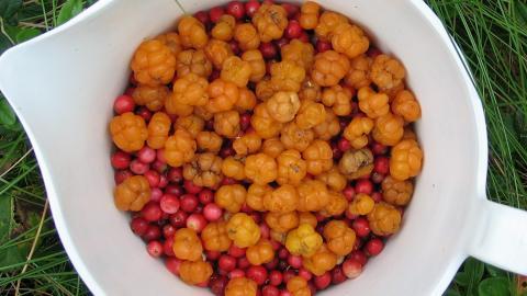 MULTER: En god kilde til vitamin E, C og kostfiber.  Foto: Thinkstockphotos