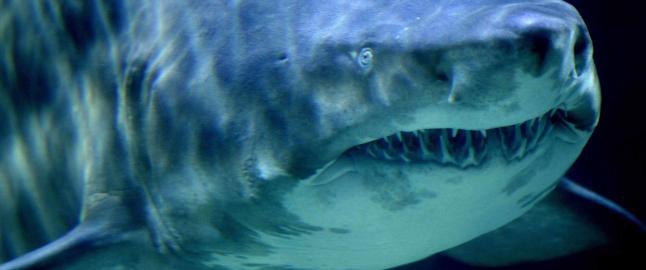 En hai reddet livet til seksbarnsfaren Toakai, etter 108 d�gn p� sj�en