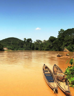 Du sitter i en båt på en brun elv, og ser dyr i de enorme trærne over deg