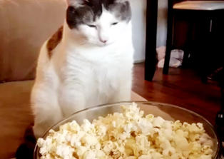 Katten Duke stapper gjerne hodet i popcornbollen