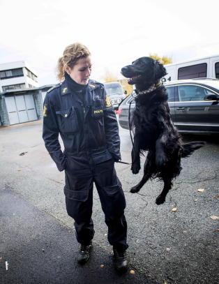 Norges beste narkohund d�de helt uten forvarsel
