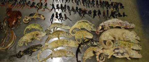 Fant hundrevis av d�de, r�tnende dyr p� flyplass