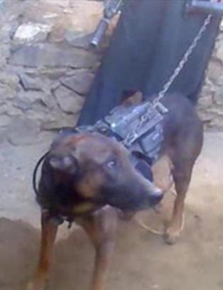 Her viser Taliban fram en litt uvanlig krigsfange