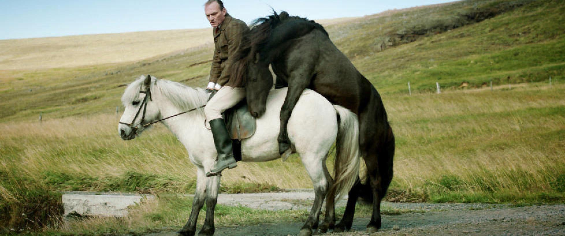 sex med hest søker mann