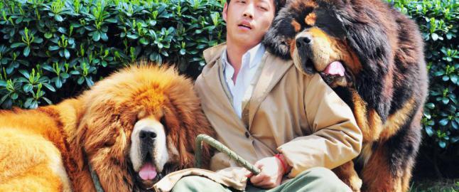 Dette er verdens dyreste hund