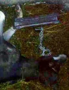 Fant hund med jernlodd festet til halsb�ndet dumpet i sj�en