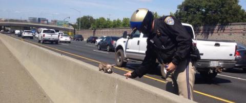 Politiet hylles etter at de reddet en liten chihuahua fra motorveien