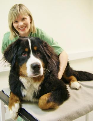 Det du gj�r av godhet - blir en katastrofe for hunden din