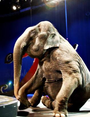 Oslo-nei til sirkuselefanter