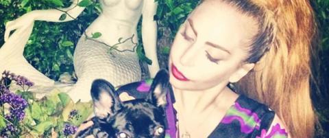 Dyrevern-organisasjon raser mot Lady Gaga