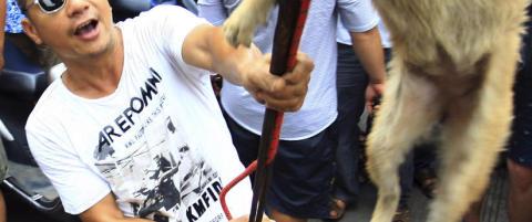 P� denne festivalen blir 10 000 hunder torturert, grillet og spist �rlig