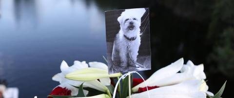 Hundrevis var p� minnestund for den druknede hunden Lucas (1)