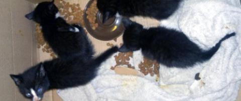 Dumpet kattefamilie - eier p�grepet fire uker etter