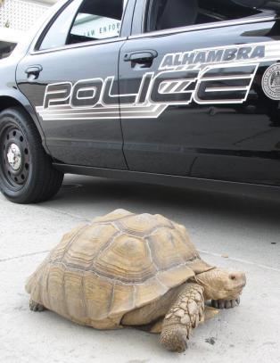 - Han fors�kte � legge p� sprang, men v�re politifolk er ganske kjappe