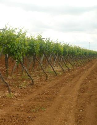 Vinene herfra har ofte en rik stil med h�y alkoholprosent