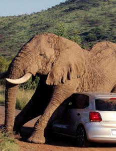 Enten var elefanten amor�s, eller s� kl�dde den bare litt