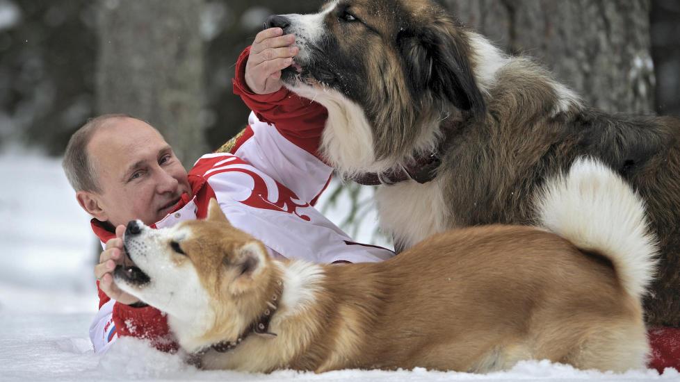 SNØFRISK: En snøfrisk Vladimir Putin her avbildet med to hunder i fjor vinter, har varslet at Russland vil innføre importforbud mot en rekke europeiske landbruksprodukter. Norge eksporterer rundt 600 tonn ost til Russland årlig, og for Tines Snøfrisk er Russland det største eksportmarkedet. Foto:  REUTERS/Alexsey Druginyn/RIA Novosti/Pool