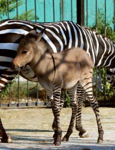 Sjekk denne zonkeyen i dyrehagen p� Krim-halv�ya