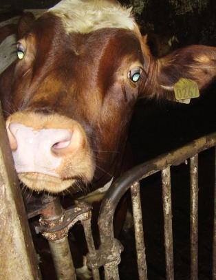 Det er lovp�lagt � slippe ut dyra, men flere st�r fortsatt inne i fj�set