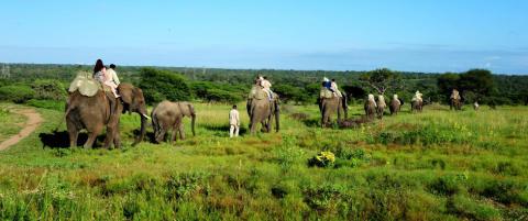 Safari fra elefantryggen