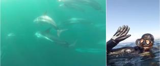 Her sv�mmer en hel delfinflokk med �rjan og kompisene